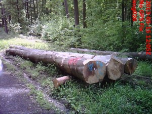 logs of sustainable forests laid along road
